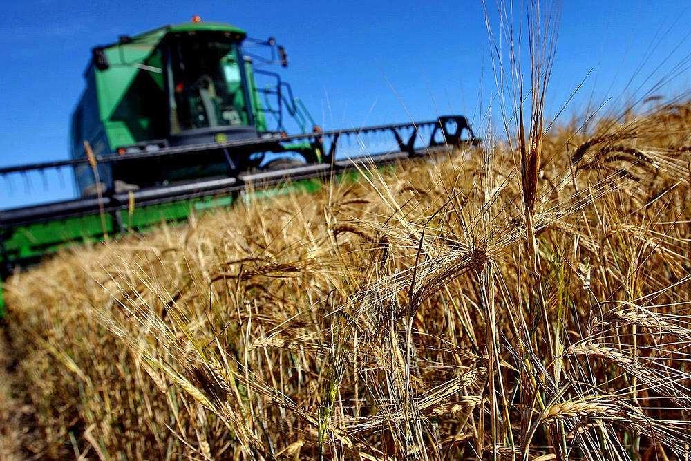 Субсидии региональным сельхозпроизводителям позволят увеличить объемы производства «Настоящего вологодского продукта»