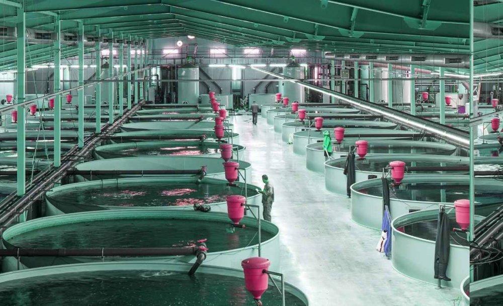 Развитие аквакультуры на Вологодчине обсудили участники биотехнологического кластера