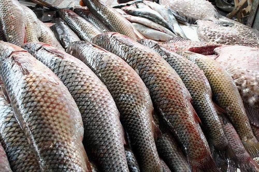 Михаил Глазков: «Развитие аквакультуры решает вопрос продбезопасности и крайне выгодно для регионального бизнеса»